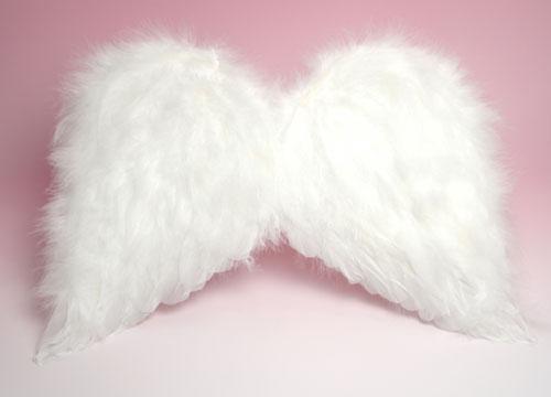 天使の羽 Sサイズ本体